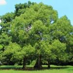 「木をかこう ブルーノ・ムナーリ氏」絵が苦手な人でも木を描けるようになる一冊