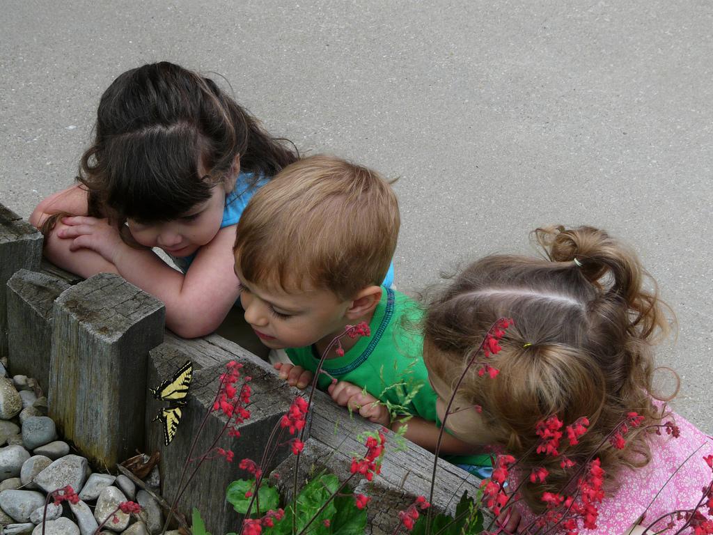 蝶と子どもたち
