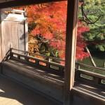 平安神宮の紅葉は美しい。併せて行ける八ッ橋の里も混雑少なめで観光できます。