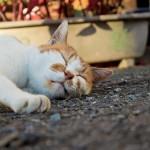 快眠度を上げるには一つのことに気を付けるだけで効果あり
