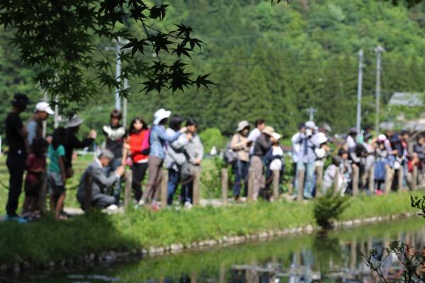 モネの池 8