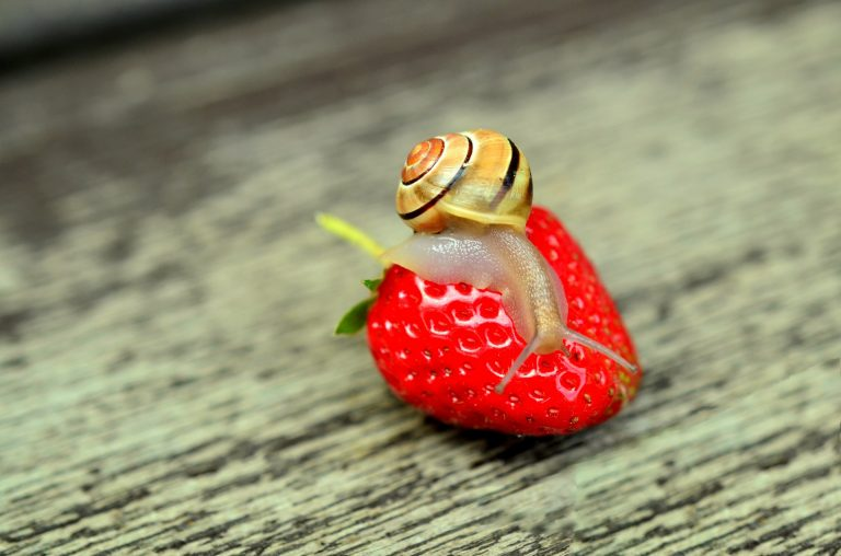 strawberry-snail-tape-worm-animal