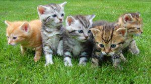 かわいい子猫たち