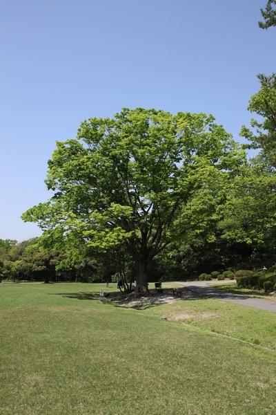 愛知県森林公園の植物園をまた散歩したい 自然に癒され 野生動物に驚きました 14