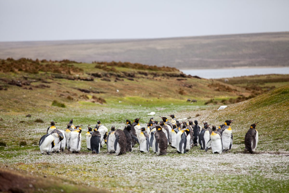 群れるペンギンたち