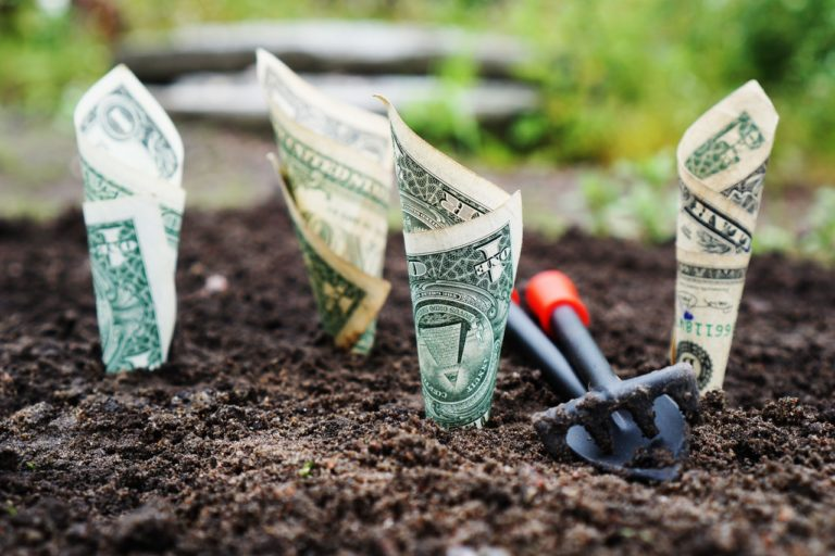 お金が生えた畑