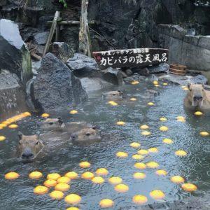 カピバラの温泉