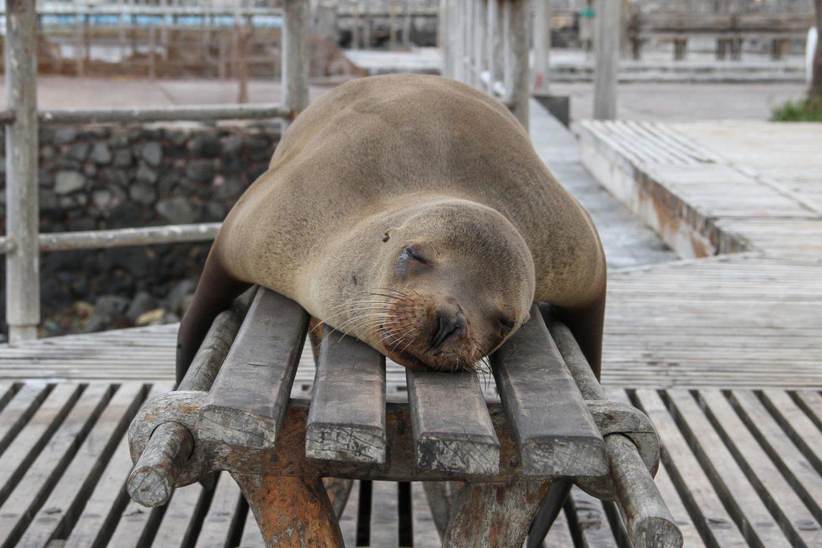 ベンチで寝るアザラシ